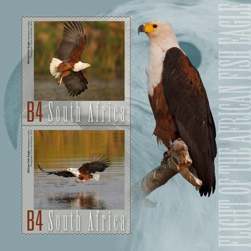 4 Flying Fish Eagle #44FB67