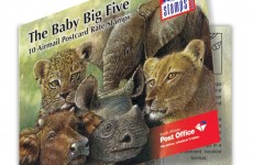 Baby-Big-5-Booklet