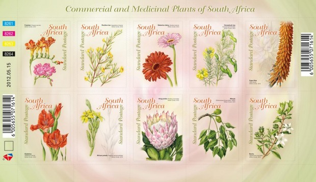 african plants used in medicine The use of medicinal plants by the symbolic and therapeutic use of plants in africa and brazil are based generally on identical prin- ciples.